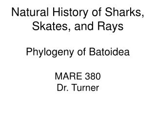 Natural History of Sharks, Skates, and Rays Phylogeny of Batoidea MARE 380 Dr. Turner