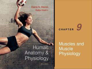 Muscles and Muscle Physiology