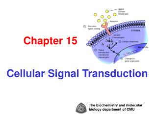 Chapter 15 Cellular Signal Transduction