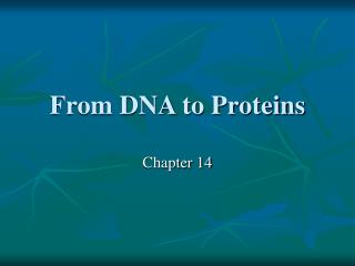 From DNA to Proteins