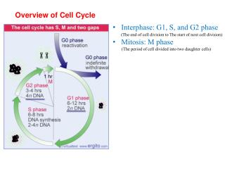 Overview of Cell Cycle