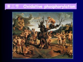 第三节   Oxidative phosphorylation