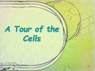 A Tour of the Cells