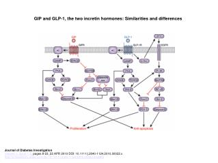 GIP and GLP‐1, the two incretin hormones: Similarities and differences