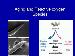 Aging and Reactive oxygen Species