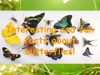 Interesting and fun facts about butterflies!