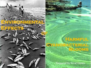 Harmful Cyanobacterial Blooms
