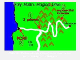 Mullis KB.   The unusual origin of the polymerase chain reaction.