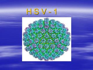 H S V - 1