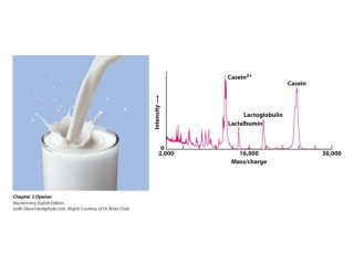 Proteins can be purified on the basis of differences in their chemical properties.