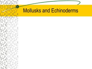 Mollusks and Echinoderms
