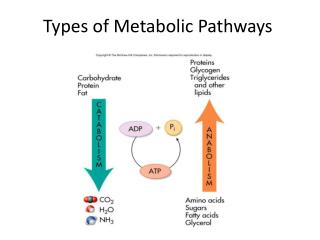 Types of Metabolic Pathways
