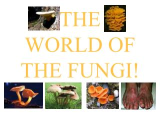 THE  WORLD OF THE FUNGI!