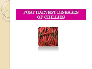 POST HARVEST DISEASES  OF CHILLIES