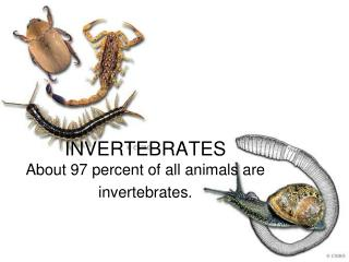INVERTEBRATES About 97 percent of all animals are invertebrates.