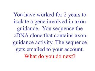 You have worked for 2 years to isolate a gene involved in axon guidance.  You sequence the cDNA clone that contains axon