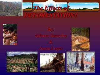 The Effects of DEFORESTATION!