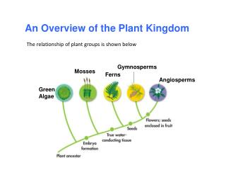 An Overview of the Plant Kingdom