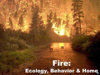Fire:  Ecology, Behavior & Home