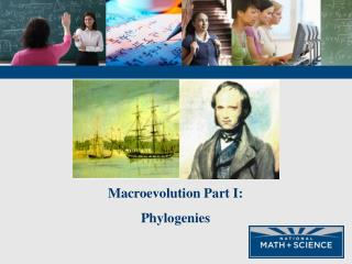 Macroevolution Part I: Phylogenies