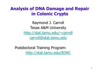 Analysis of DNA Damage and Repair in Colonic Crypts
