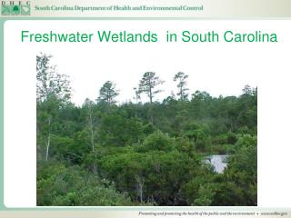 Freshwater Wetlands  in South Carolina