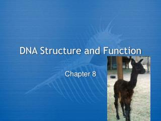 DNA Structure and Function