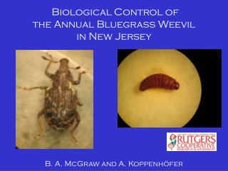 Biological Control of  the Annual Bluegrass Weevil  in New Jersey