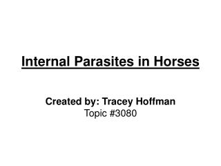 Internal Parasites in Horses