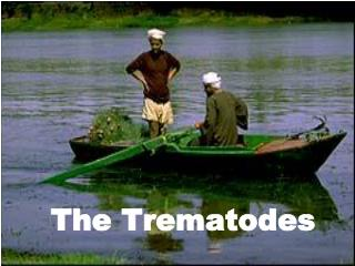 The Trematodes