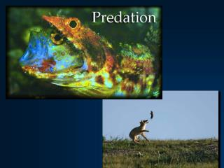 Predation – what is it?