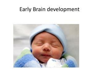Early Brain development