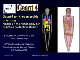 Geant4 anthropomorphic phantoms: models of the human body for radiation protection studies