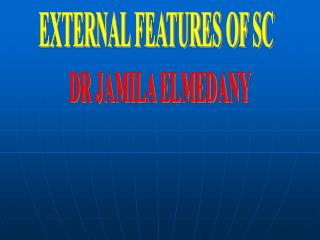 EXTERNAL FEATURES OF SC