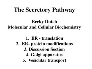 The Secretory Pathway Becky Dutch Molecular and Cellular Biochemistry 1.  ER - translation