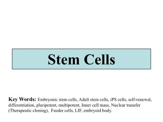 Stem Cells    and Embryonic      Development