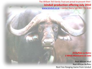 Real African Mud Real African Buffalo Real Free Ranging Game from Izinduli