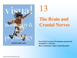 13 The Brain and Cranial Nerves