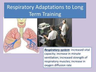 Respiratory Adaptations  to Long Term  Training