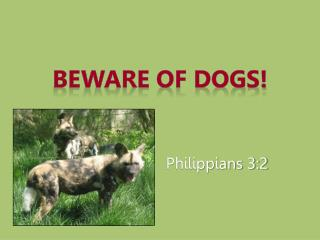 Beware of Dogs!
