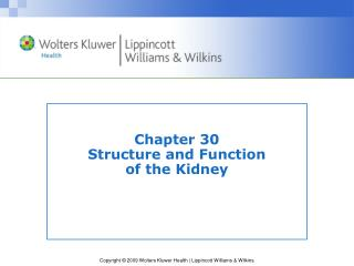 Chapter 30 Structure and Function  of the Kidney