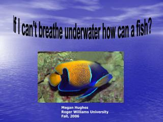 If I can't breathe underwater how can a fish?