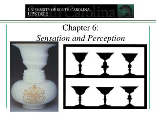Chapter 6:   Sensation and Perception
