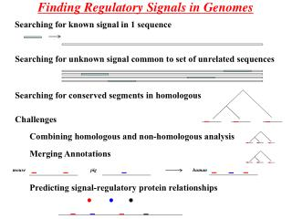 Finding Regulatory Signals in Genomes