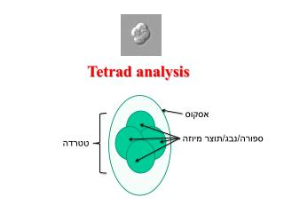 Tetrad analysis