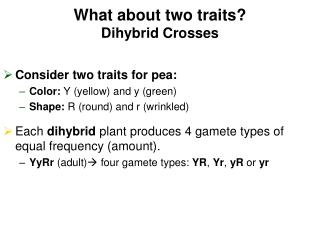 What about two traits? Dihybrid Crosses