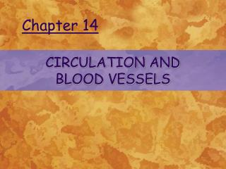 CIRCULATION AND  BLOOD VESSELS