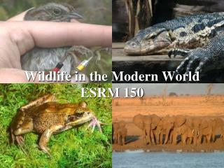 Wildlife in the Modern World ESRM 150