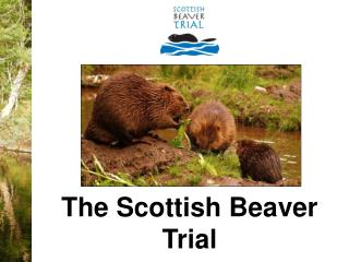 The Scottish Beaver Trial