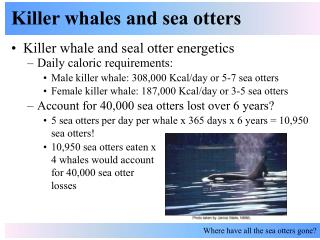 Killer whales and sea otters